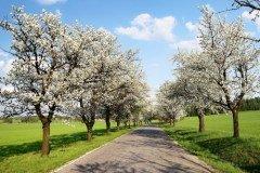 Навруз знаменует первый день весны и обновление природы (Фото: Daniel Prudek, Shutterstock)