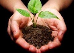 Добровольная посадка деревьев — важное общественное мероприятие