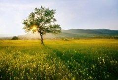 Однажды Солнце спустилось на Землю и осталось здесь навсегда (Фото: SSokolov, Shutterstock)