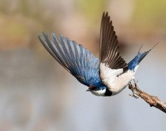 Считалось, что именно на Маврикия прилетают домой грачи, скворцы и ласточки (Фото: Andre Valadao, Shutterstock)