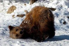 А главным событием Евтропиева дня было пробуждение медведя (Фото: ecliptic blue, Shutterstock)