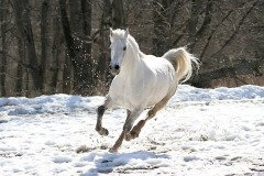 Если лошадь фыркает в дороге — будет радостная встреча (Фото: terekhov igor, Shutterstock)