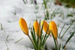 В этот день в проталинах появлялись первые цветы (Фото: Philip Stridh, Shutterstock)