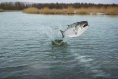 Весь год ловись, рыбка, большая и маленькая (Фото: Krasowit, Shutterstock)
