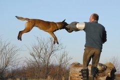 Полиция всегда должна быть во всеоружии (Фото: Marcel Jancovic, Shutterstock)
