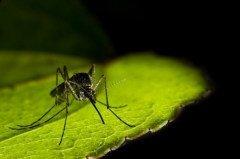 Около 90% случаев заболевания приходится на районы Африки южней Сахары (Фото: Dmitrijs Bindemanis, Shutterstock)