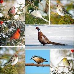 Сегодня вся планета отмечает Международный день птиц (Фото: KellyNelson, Shutterstock)