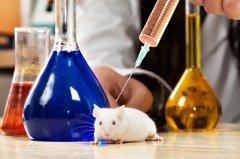 Сегодня уже по всему миру активно развивается движение против экспериментов и опытов над лабораторными животными (Фото: Yurchyks, Shutterstock)