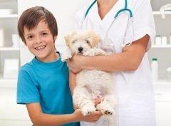 Сегодня — День ветеринарного врача — один из самых гуманных праздников (Фото: Ilike, Shutterstock)