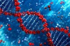 Именно в ДНК хранится наша генетическая информация (Фото: Leigh Prather, Shutterstock)