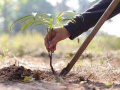 Многие жители страны принимают участие в работах по озеленению своих районов... (Фото: FreeBirdPhotos, Shutterstock)