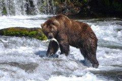 Считалось, что именно на Антипа медведь выходит из берлоги (Фото: Antoni Murcia, Shutterstock)