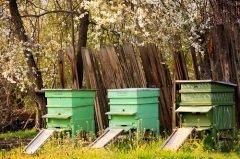 В этот день пчелиные ульи выставляли на свежий воздух (Фото: SSokolov, Shutterstock)