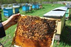 Доброго человека и пчела не жалит (Фото: darios, Shutterstock)