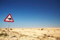 Деятельность человека должна быть направлена на сокращение пустынных районов