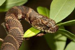 Спасти от змеиного яда в этот праздник не сможет ни один знахарь (Фото: Steve Byland, Shutterstock)