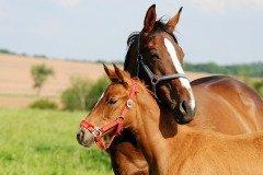 «Распрягальник — севу край, коня распрягай» - говорили в народе (Фото: Karel Gallas, Shutterstock)