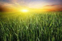 На Устина внимательно наблюдают, как восходит солнце (Фото: Elenamiv, Shutterstock)