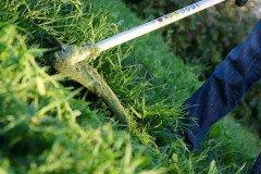 В народе знали: если вовремя не справиться с сорняками — они сами тебя по миру пустят (Фото: Vitalliy, Shutterstock)
