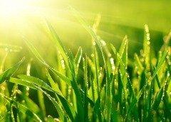 На Руси говорили: «На Варнаву не рви травы» (Фото: Dudarev Mikhail, Shutterstock)