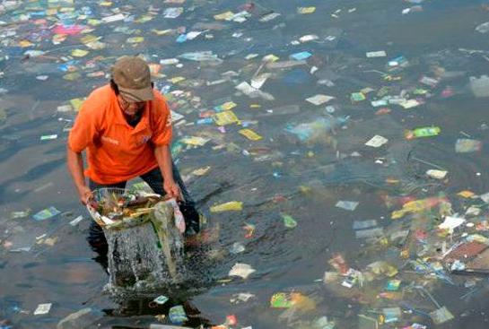 morskaya-ryba-privykaet-pitatsya-plastikom