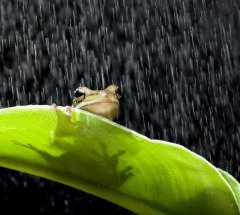 На Евсевия примечали приметы погоды (Фото: Anneka, Shutterstock)