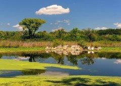 Считалось, что в местах скопления ряски водятся русалки... (Фото: Nagel Photography, Shutterstock)