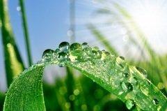 С этого дня начинали выпадать большие росы (Фото: Vaclav Volrab, Shutterstock)