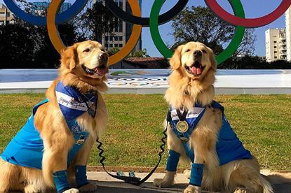v-brazilii-ustroili-olimpijskie-igry-dlya-zhivotnykh