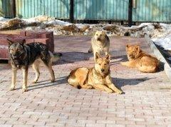 Эта дата считается не праздником, а поводом обратиться к проблеме бездомных животных (Фото: CTatiana, Shutterstock)