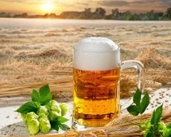Пиво – очень древний напиток (Фото: Vaclav Mach, Shutterstock)