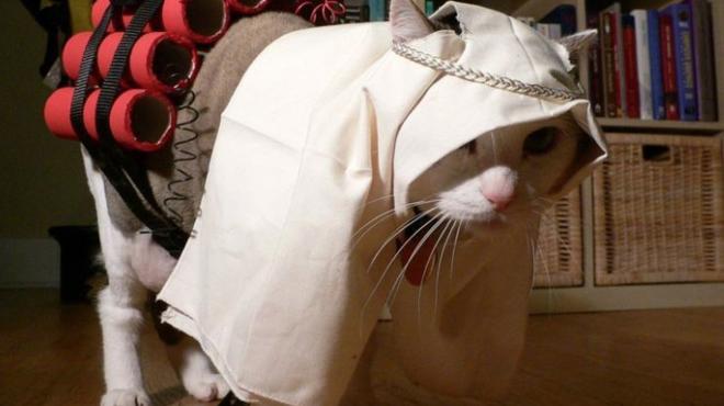 боевики группировки ИГ используют котят для вербовки