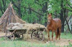 В частности, на Онуфрия было принято заниматься закромами (Фото: Sergey Kamshylin, Shutterstock)