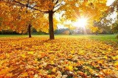К этому времени начинался активный листопад, приближалась осень (Фото: S.Borisov, Shutterstock)