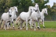 На Флора и Лавра не допускалось привлекать лошадей к работе (Фото: Lenkadan, Shutterstock)