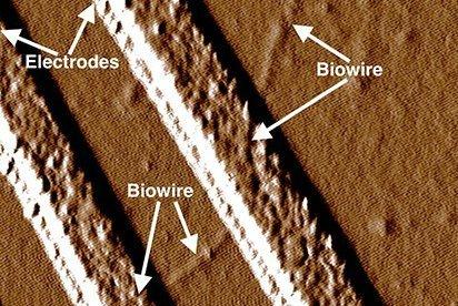bakterij-nauchili-delat-ehlektricheskie-provoda