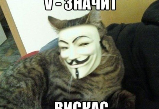 viskas-dlya-kotov