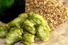 Хмель — символ собранного урожая (Фото: Velychko, Shutterstock)