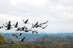 Птицы улетают зимовать в теплые края (Фото: Mary Nguyen NG, Shutterstock)