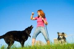 В России наблюдается тенденция роста заражения бешенством среди животных (Фото: siamionau pavel, Shutterstock)