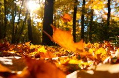 Если на Ефимию тепло и сухо, то зима придет поздно и будет мягкой (Фото: Sergey Peterman, Shutterstock)