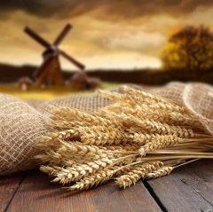 На Астафия Ветряка отмечали свой праздник мельники (Фото: MaxPhotographer, Shutterstock)