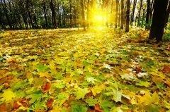 Листопадную называли началом настоящей осени (Фото: Gulei Ivan, Shutterstock)