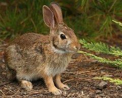 На Феофана охотники добывали именинного зайца (Фото: Helen E. Grose, Shutterstock)