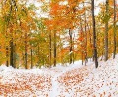 По приметам, если первый снег выпадал на Михаила, значит, зима настанет еще не скоро (Фото: Mayovskyy Andrew, Shutterstock)