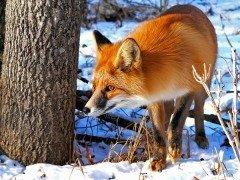 «С Ерофея холода сильнее», - говорили наши предки (Фото: Kirsanov, Shutterstock)