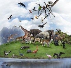 Всемирный день животных — особая дата для всех, кто любит животных (Фото: Svetlana Foote, Shutterstock)