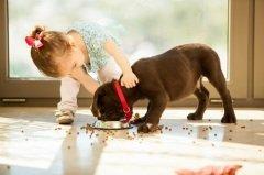Ты навсегда в ответе за тех, кого приручил - девиз Дня (Фото: AntonioDiaz, Shutterstock)