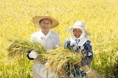 День был основан как традиционный праздник окончания сельскохозяйственных работ (Фото: kazoka, Shutterstock)
