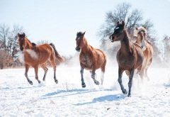 «Гурьян без лошади, что зима без января», - говорили в народе (Фото: Sari ONeal, Shutterstock)